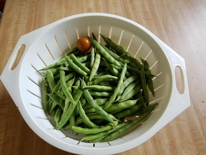 beans final